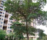 《根竹大廈》村委統建樓,首付五成,無條件分期三年到五年。